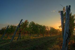 Sonnenaufgang Toscana mit Weinreben