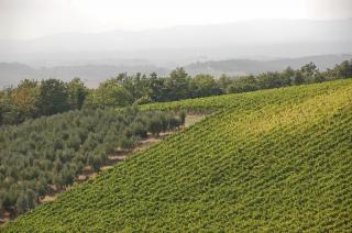 Chianti - Wein und Oliven