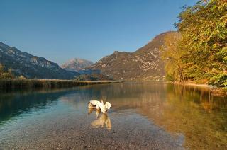Lago di Cavazzo mit Schwänen