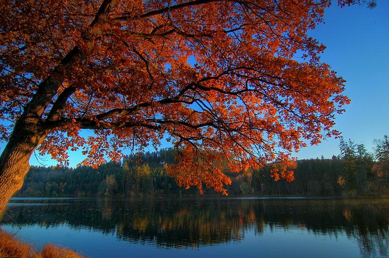 Goldener Herbst – Am Moosburger Mitterteich