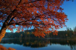 Moosburger Mitterteich im Herbst