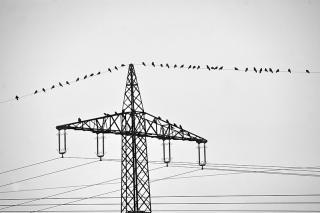 Vögel am Strommast