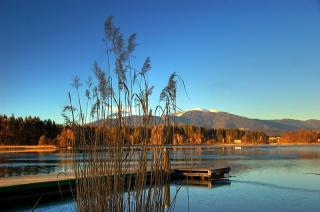 Frühling am Faaker See - Schilf