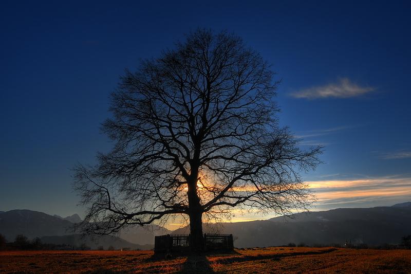 Ein Baum zum Gedenken…