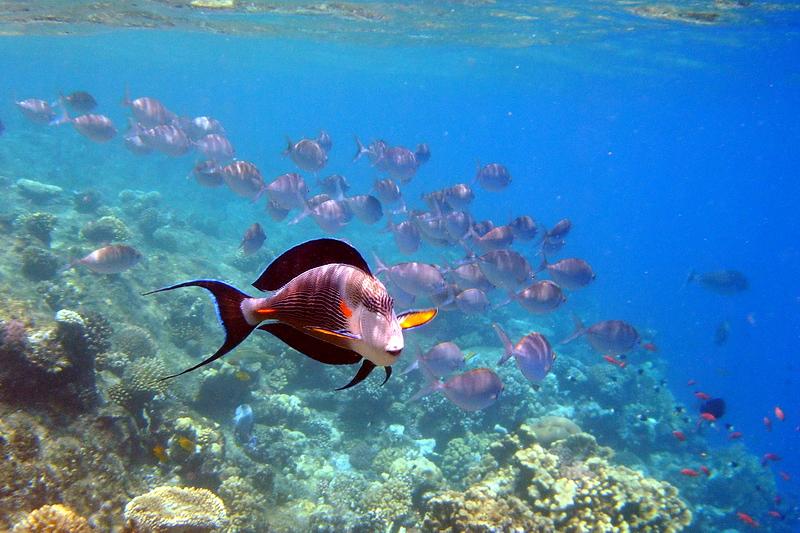 Tauchen und Schnorcheln im Roten Meer