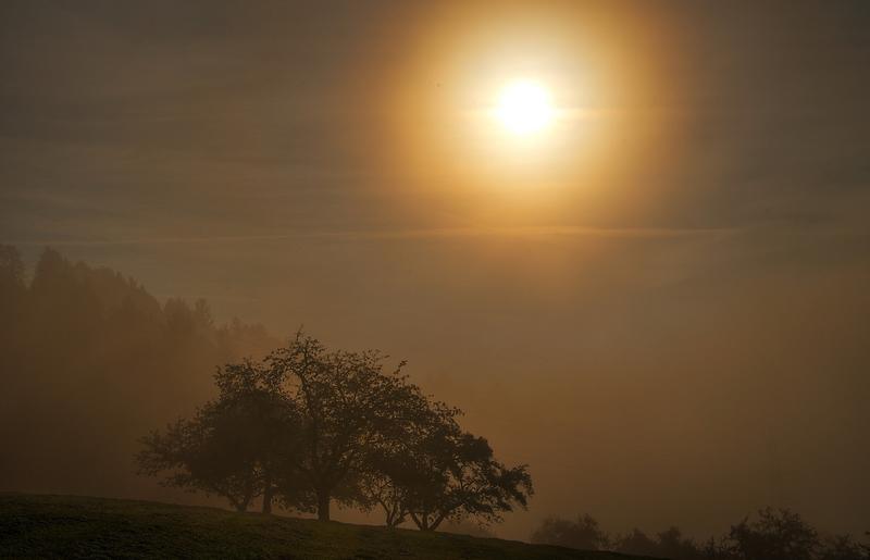 Nebelschleier…