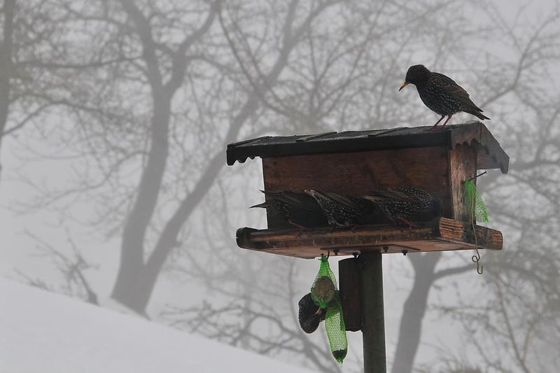 Die Vögel…