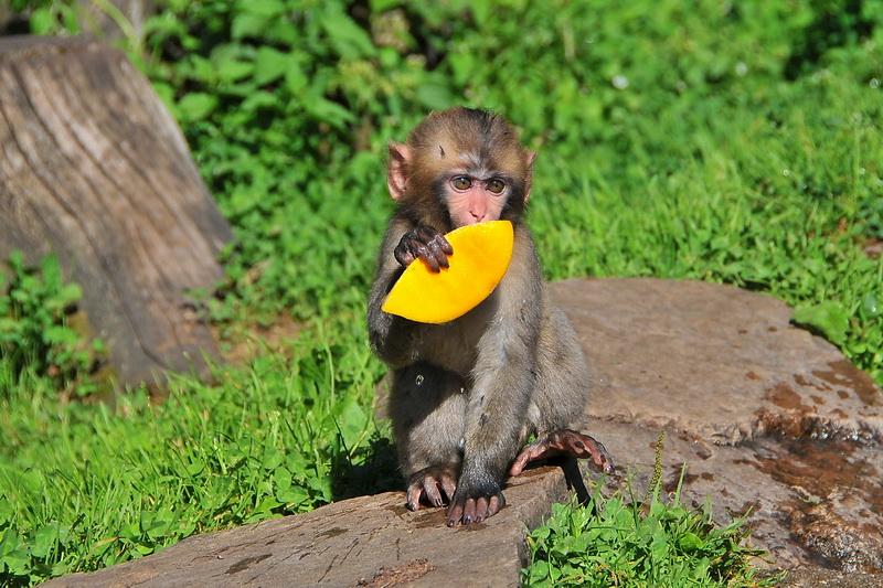 Die Affen sind los…