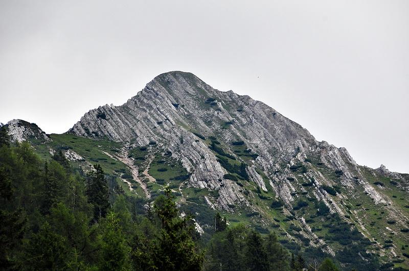Spitzegel (2.118)