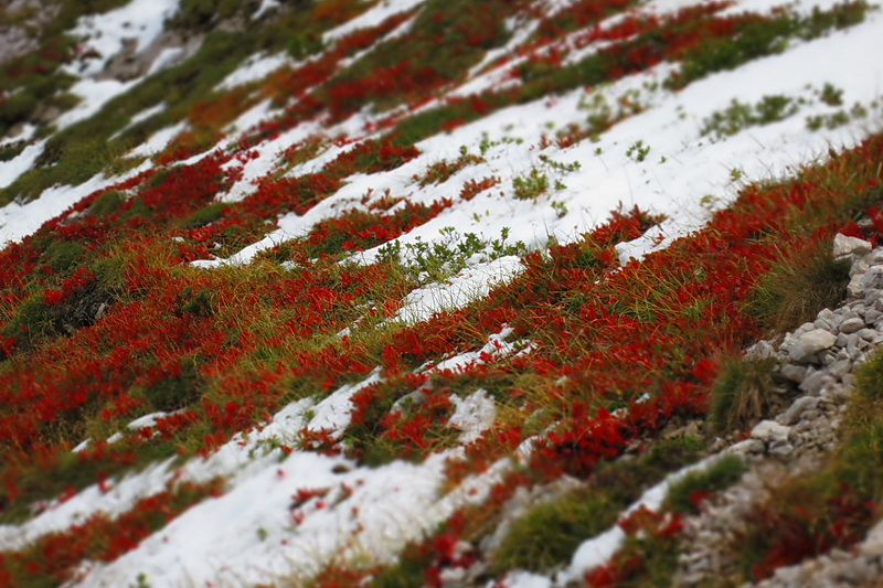 Dobratsch über Alpenlahner