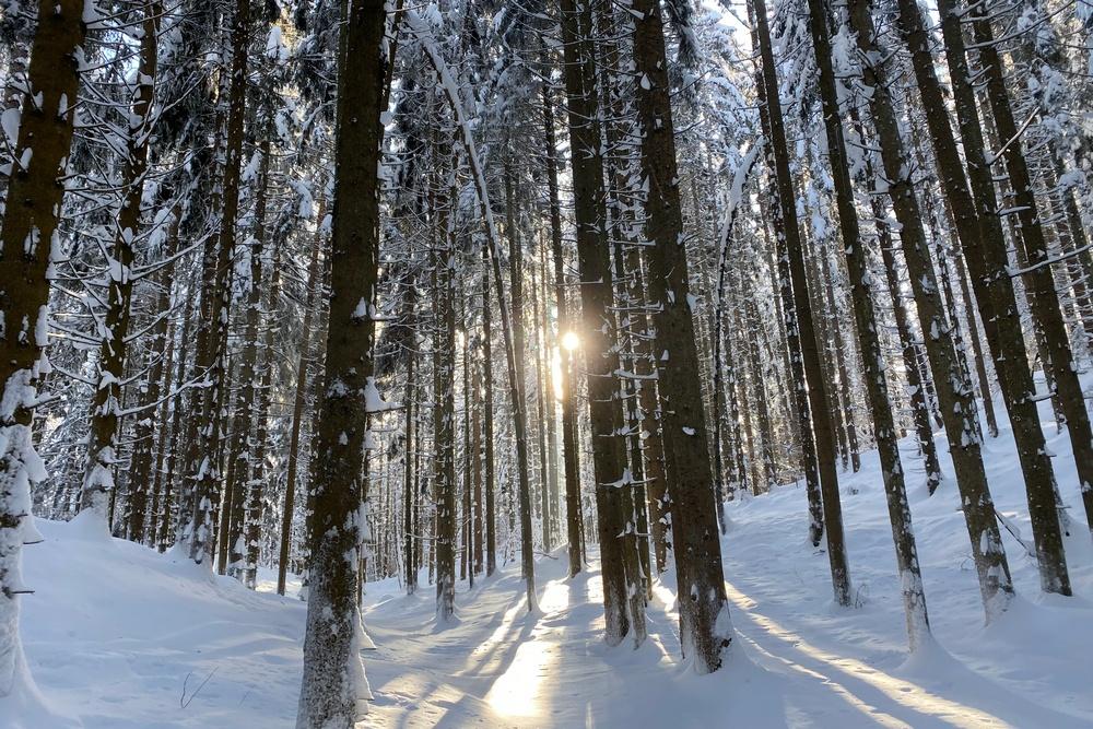 Skitour Wabenkopf (1.325)